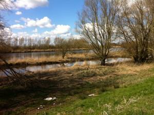 Biesbosch2